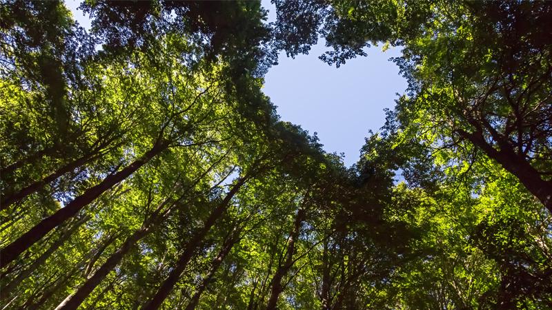 ballerstaedt-nachhaltigkeit-umwelt