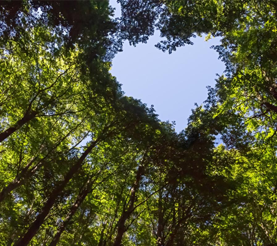 Unsere Werte | Umweltschutz
